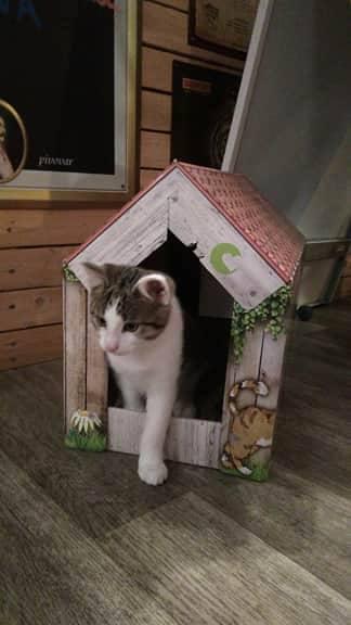 Kočičí kavárna2