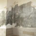 21 poškozené stěny v hrubé přípravně zeleniny a brambor