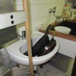 umyvadlo pro mytí rukou v kuchyni